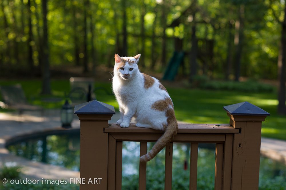 backlit cat at f/2.8 ISO 320 with a Leica M9-P