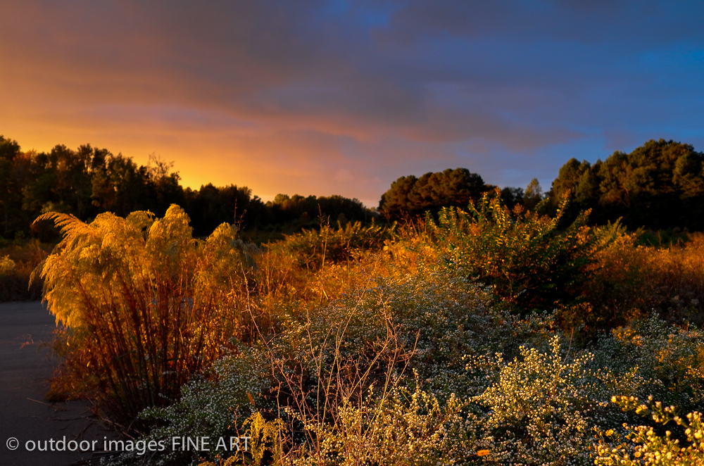blazing bushes sunset